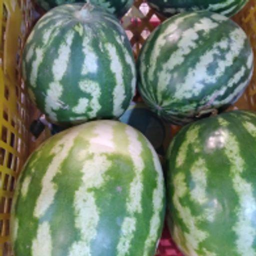 هندوانه 7 تا 9 کیلو