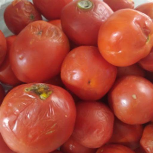 گوجه ربی آخربار