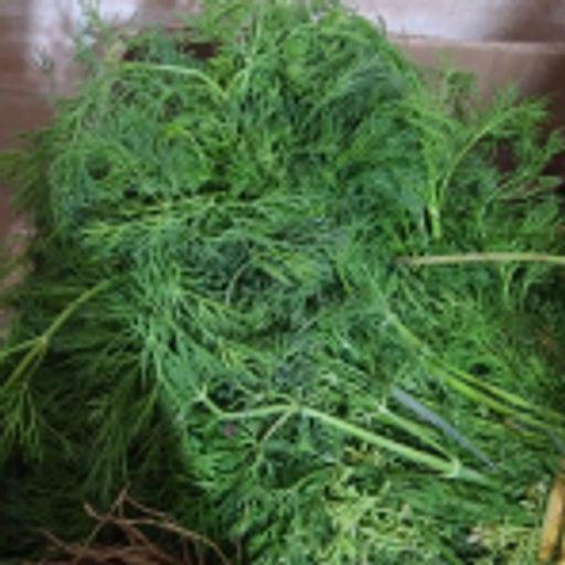سبزی تازه - شوید