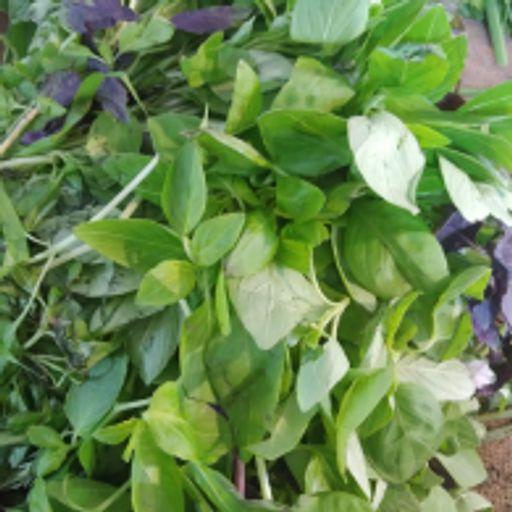 سبزی تازه - ریحان