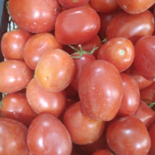 گوجه فرنگی بوته ای