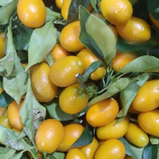 کامکوات