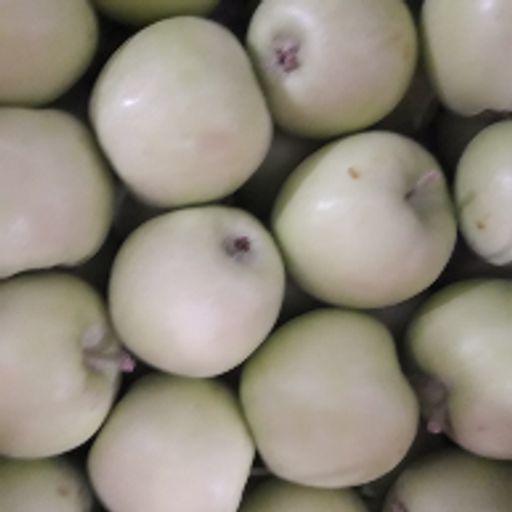 سیب سبز ایرانی