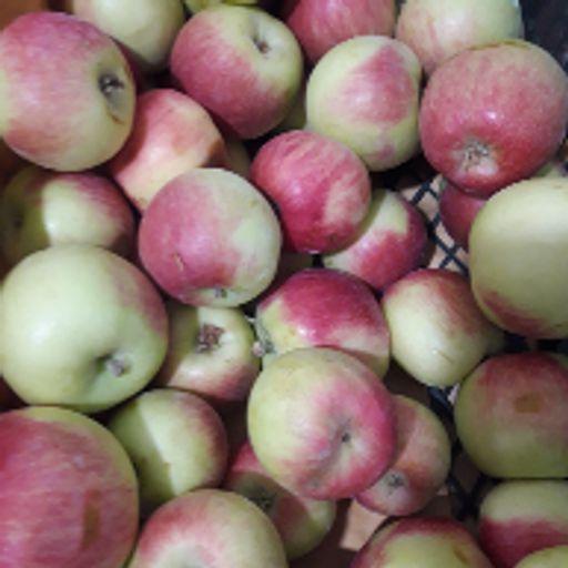 سیب گالا