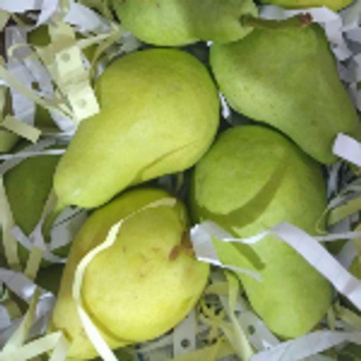 گلابی شاه میوه